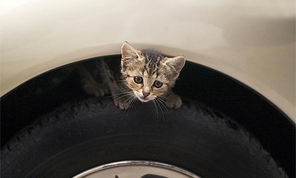 Конструкцию Lada Kalina попросили изменить из-за опасности для кошек