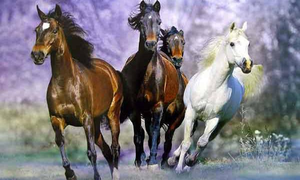 В Петербурге на КАД спасатели поймали 7 лошадей