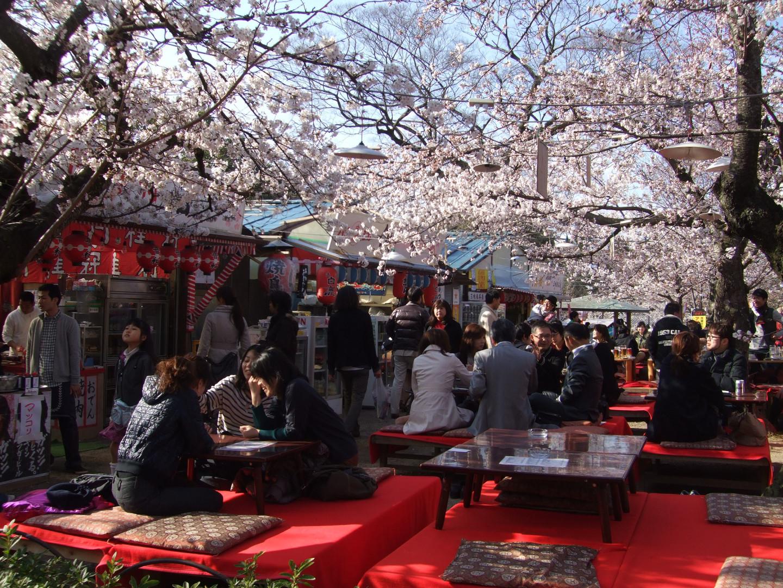 Японцы во время празднования Ханами