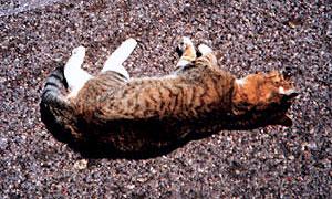Кошка стала причиной ДТП
