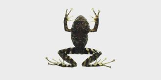Фото: tandfonline.com