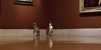 Фото:  Kansas City Zoo / YouTube