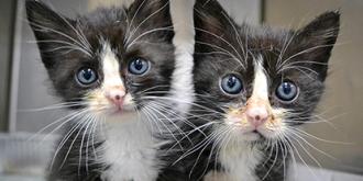 Фото: sinogene.org/cat-cloning