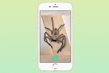 Фото: critterpedia.com