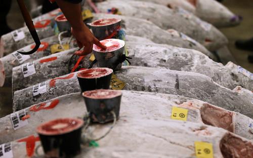 Перед началом новогоднего аукциона на рынке проверяют качество выставленной на продажу рыбы