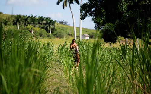 <p>Сахарная промышленность&nbsp;&mdash;&nbsp;основной источник доходов Кубы на&nbsp;протяжении всей ее истории. До революции 1959 года главным рынком сбыта кубинского тростникового сахара были&nbsp;США, его экспорт обеспечивал до&nbsp;трети американского рынка. После прихода к&nbsp;власти Кастро основным потребителем сахара с&nbsp;Кубы стал Советский Союз, развал которого принес огромные неприятности экономике Острова Свободы: если&nbsp;в&nbsp;1970-х годах Куба ежегодно производила около&nbsp;8 млн т сахара, то&nbsp;к&nbsp;концу 2000-х&nbsp;&mdash;&nbsp;всего около&nbsp;1,3&nbsp;млн. Тем не&nbsp;менее, по&nbsp;данным за&nbsp;2014&nbsp;год, продажа сахара принесла стране $392&nbsp;млн. Главным потребителем традиционного кубинского продукта последние годы остается Китай.</p>  <p><em>На фото: фермер на&nbsp;сахарной плантации в&nbsp;окрестностях Гаваны</em></p>