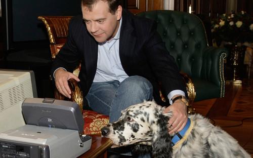 <p><strong>2008&nbsp;год. </strong>Светлана Медведева подарила своему мужу собаку породы английский сеттер. Ему дали кличку Дэниел, а&nbsp;спустя&nbsp;год он выиграл главный приз на&nbsp;выставке &laquo;Золотой ошейник&raquo;</p>