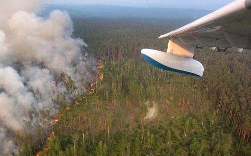 Лесные пожарыв Красноярском крае, 2019 год