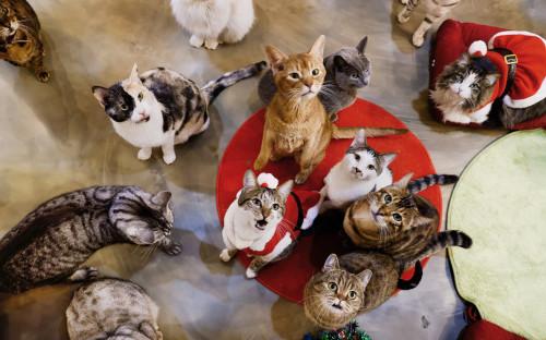 Аналитики выяснили, что кошек чаще собак тестируют на коронавирусы