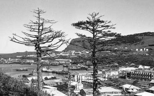 <p>Официальные российско-японские отношения впервые закреплены в&nbsp;Симодском трактате (1855 год), по&nbsp;которому Японии отошли Итуруп, Кунашир и&nbsp;острова Малой Курильской гряды, остальные Курилы признавались российскими, а&nbsp;Сахалин был объявлен совместным владением&nbsp;&mdash; &laquo;неразделенной&raquo; территорией. Было заключено несколько двусторонних договоров, по&nbsp;итогам которых к&nbsp;1905 году все Курильские острова и&nbsp;часть Сахалина к&nbsp;югу от&nbsp;50-й параллели оказались во&nbsp;владении Японии.</p>