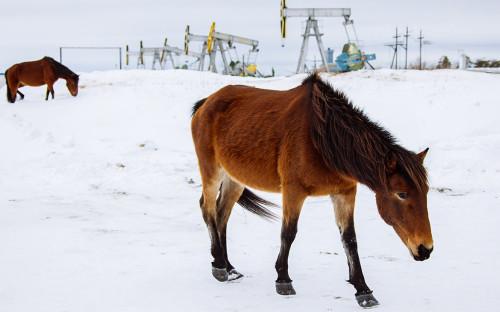 Фото:Алексей Андронов / ТАСС