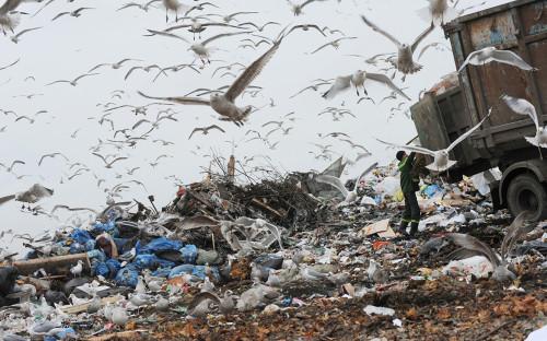 Фото:Сергей Ермохин / РИА Новости