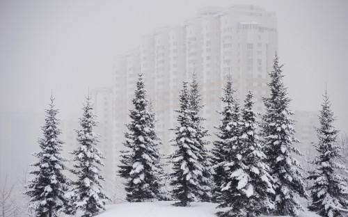 Фото:Нина Зотина / РИА Новости