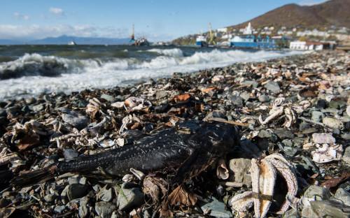 Фото:Дмитрий Шаромов / Greenpeace