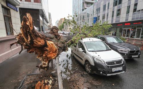 """<p><strong>Когда: </strong>29 мая 2017 года.</p>  <p><strong>Что было: </strong>сильный дождь с&nbsp;грозой и&nbsp;градом, а&nbsp;также шквалистый ветер с&nbsp;порывами до&nbsp;22 м/с.</p>  <p><strong>Последствия: </strong><a href=""""http://www.rbc.ru/society/29/05/2017/592c3b139a7947f9816e4d46?from=subject"""">приостановлено</a> движение транспорта, в&nbsp;результате&nbsp;падения деревьев пострадали автомобили, в&nbsp;Истринском районе обрушилась пирамида возле&nbsp;деревни Козенки, сорвало крышу Сенатского дворца в&nbsp;Кремле, на&nbsp;стройке ЖК &laquo;Люберецкий&raquo; в&nbsp;подмосковных Люберцах упал башенный кран застройщика ГК &laquo;ПИК&raquo;.<br /> <br /> <strong>Жертвы: </strong>ураган стал самым крупным по&nbsp;числу человеческих жертв за&nbsp;всю историю метеорологических наблюдений в&nbsp;столице. 11 человек в&nbsp;Москве и&nbsp;двое в&nbsp;Подмосковье погибли. Более 50 пострадали.<br /> &nbsp;</p>"""