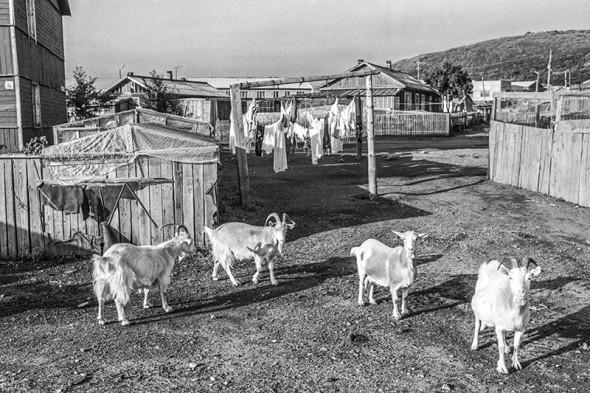Двор в поселке Курильск на острове Итуруп