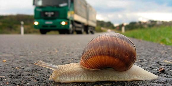 А можно ли получить наказание за слишком медленную езду по дорогам?