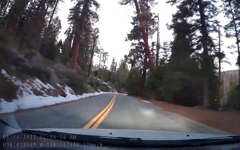 Видеорегистратор заснял падение гигантского дерева на седан Pontiac
