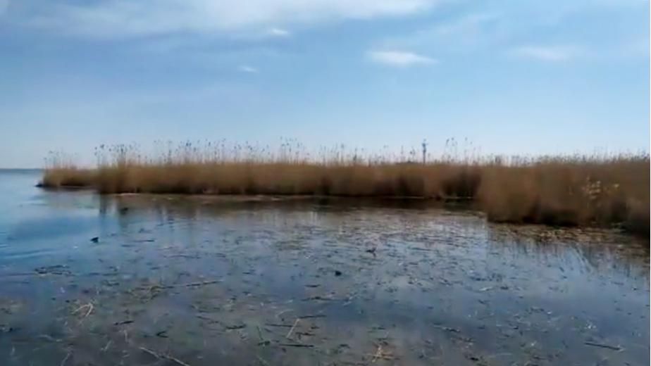 Видео: Каспийский природоохранный центр