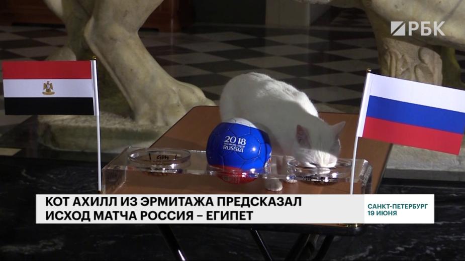Кот Ахилл предскажет результат матча Российская Федерация