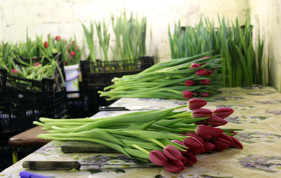 Срезанные цветы хранятся в холодильнике до двух недель