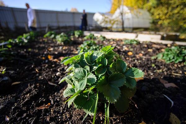 Наибольшей популярностью пользовались товары для сада и огорода