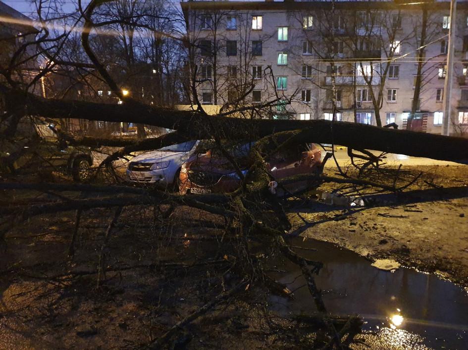 На Институтском проспекте дерево упало на автомобили