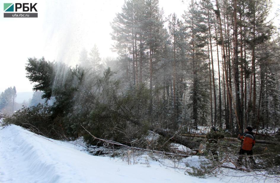 По пути к деревне валят лес. Тут пройдет линия электропередач.
