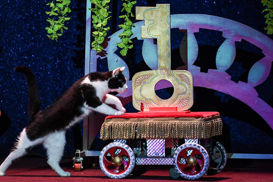Театр кошек Юрия Куклачева