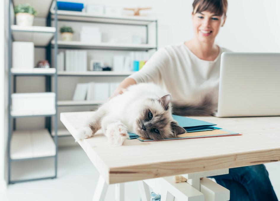Владельцы домашних животных— самые счастливые люди в 2020 году