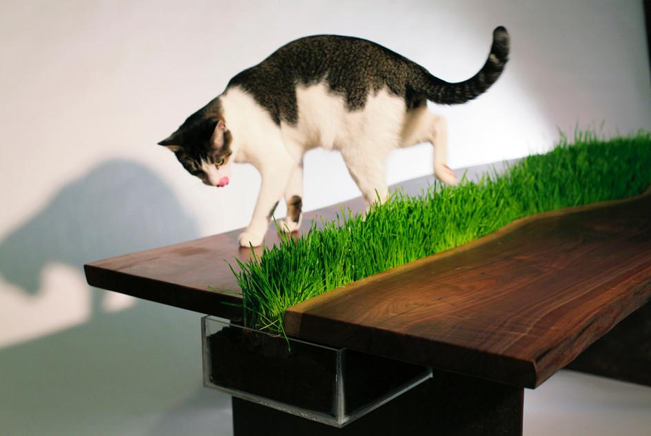 Стол с контейнером для кошачьей травы