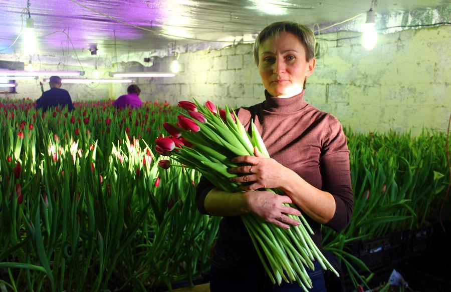 Срезать цветы приезжает вся семья. На фото - дочь Светлана.
