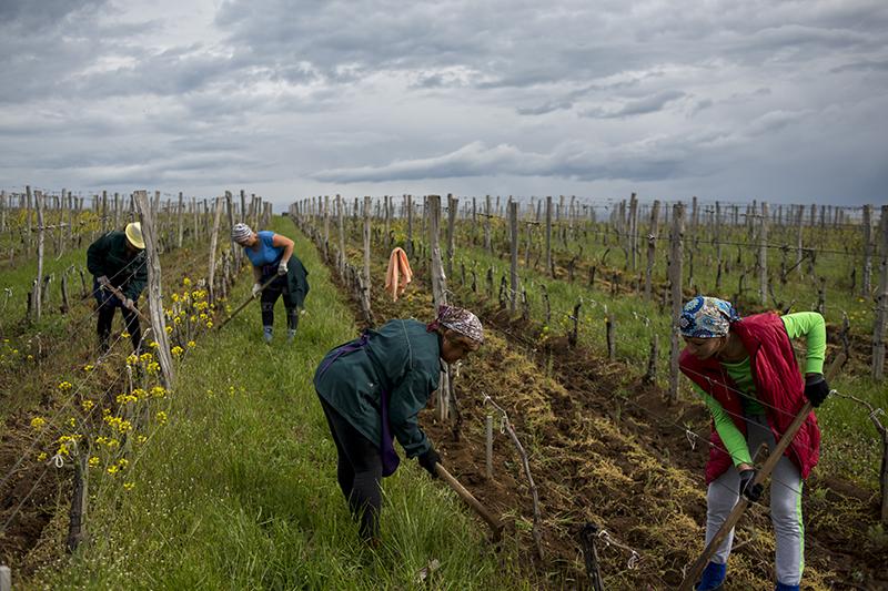 Виноградники «Лефкадии»