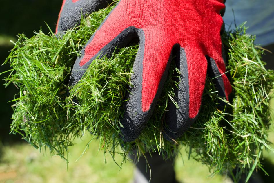 Мульча— ценное удобрение и современный способ борьбы с сорняками
