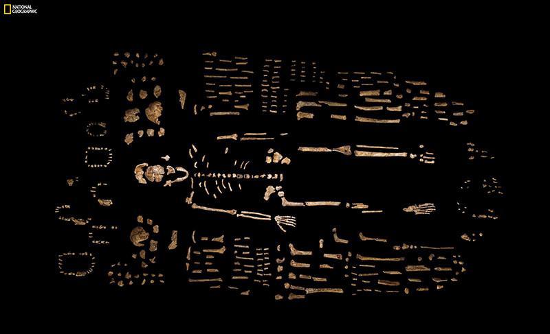 Каркас скелета Homo naledi,обнаруженный в пещерном комплексе Райзинг-Стар