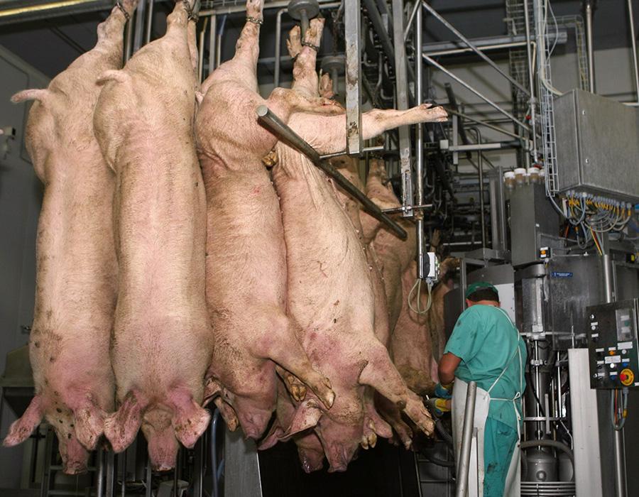 Цех по первичной переработке мясакомпании«Мираторг»