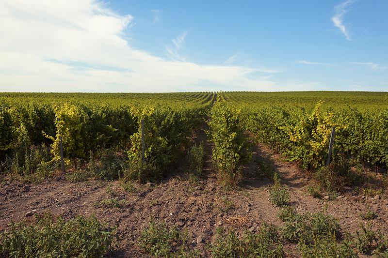 «Мы подумали: нам будет по60лет, мы будем сидеть ипить вино,— рассказывает Ланфранко Чирилло отом, какродилась идея проекта.— Это проект сдлинной окупаемостью. Но я считаю, чтоинвестиции вземлю всвоей стране—это хорошие инвестиции»