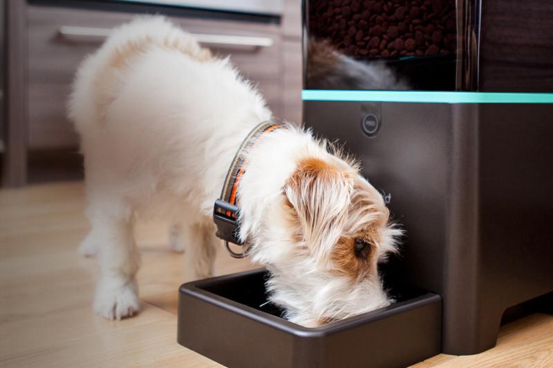 Компания PetNet, в которую инвестировал Дмитрий Гришин, производит автоматические «кормилки» с удаленным управлением для домашних животных