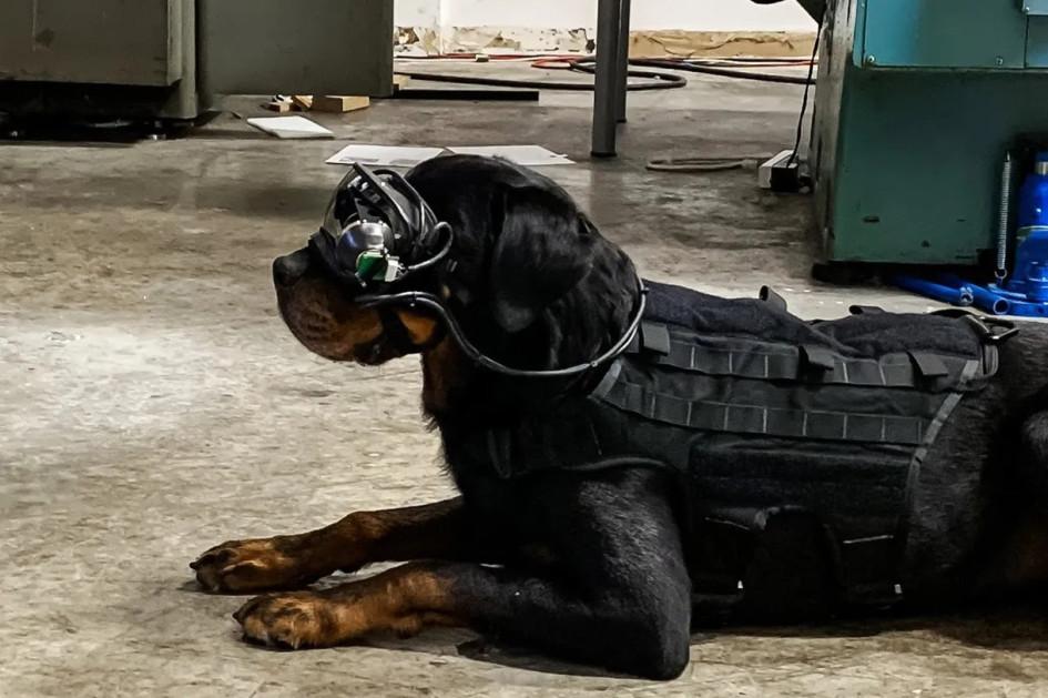 «Умные» очки для служебных собак армии США