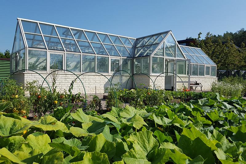 На огороде у Володина растут клубника, тыква, помидоры и огурцы