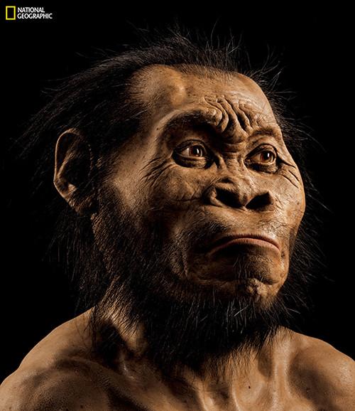 Реконструкция лицаHomo Naledi
