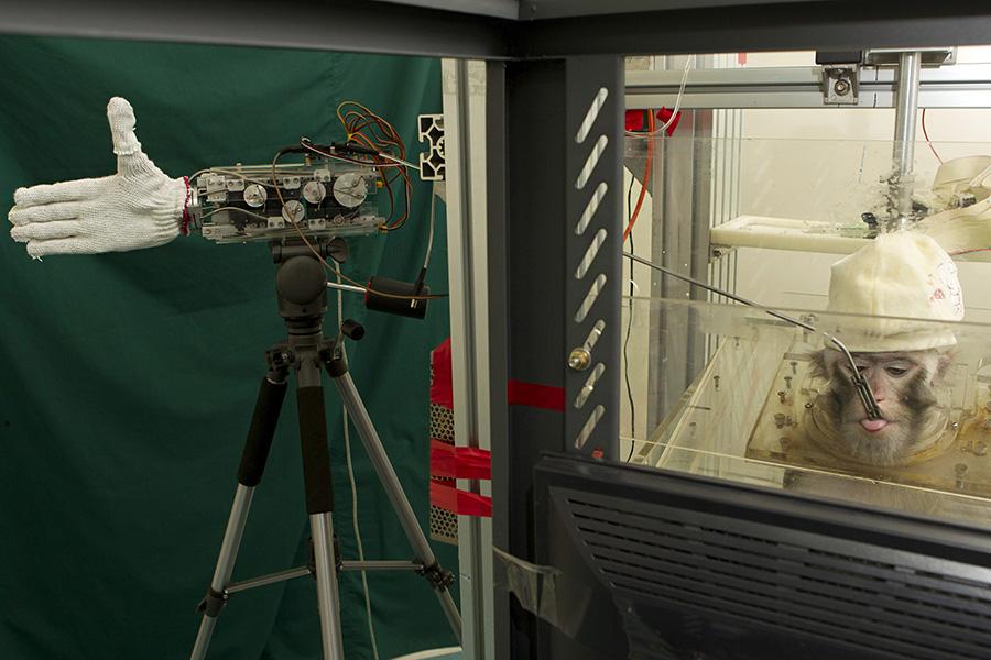 Технология BMI (brain-machine interface). Вживленный вмозг животного микрочип позволяет обезьяне управлять механической рукой. Таким образом BMI может помочь парализованным людям. Китай, Чжэцзянский университет. Февраль 2012 года
