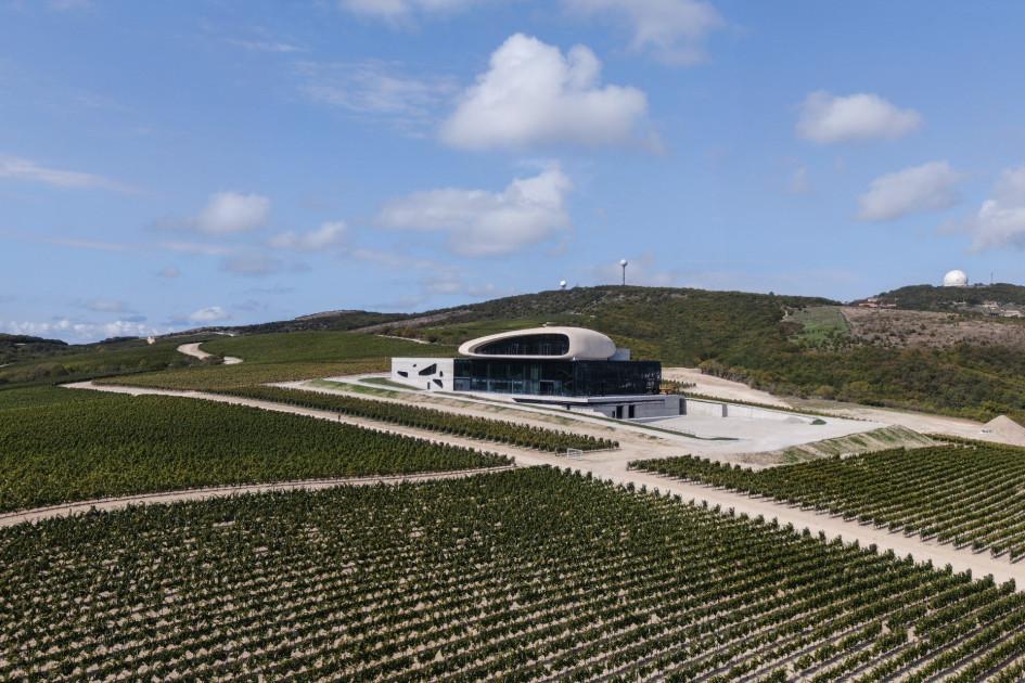 Виноградники расположены на холмах вблизи побережья Черного моря.