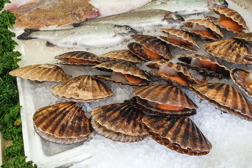 Камчатские гребешки — один из самых вкусных деликатесов