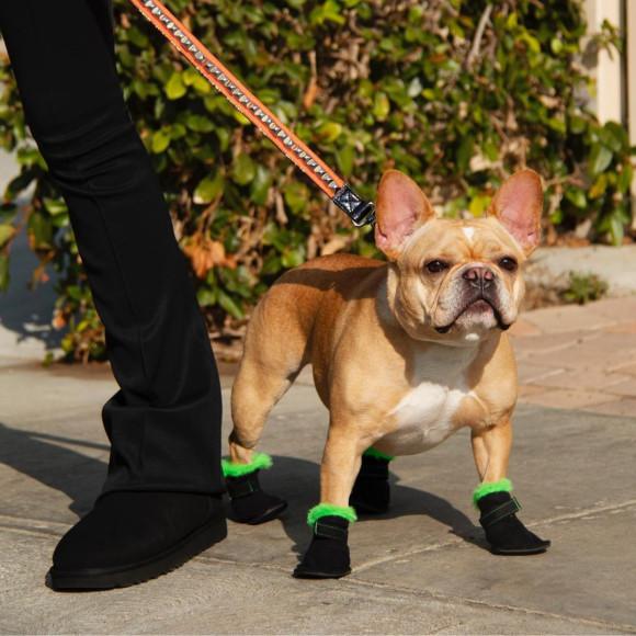 Обувь из коллаборации UGG и Very Important Puppies (V.I.P.)