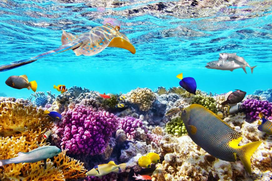 Подводный мир (ANI Private Resort Anguilla)