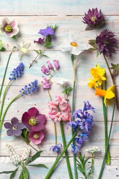 Джесс Хирш, «Энергичный цветочный стенд»