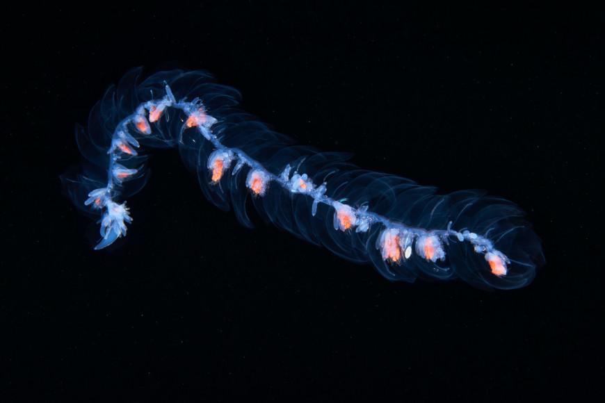 Подводный мир Камчатки