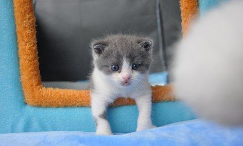 Котенок Чеснок