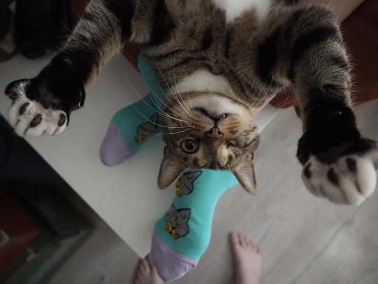 Проект St. Friday Socks «Мир, дружба, лапки!»